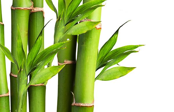 bamboo socks material