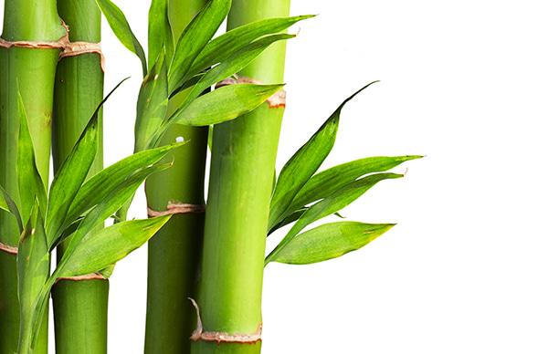 sleet&sole-bamboo
