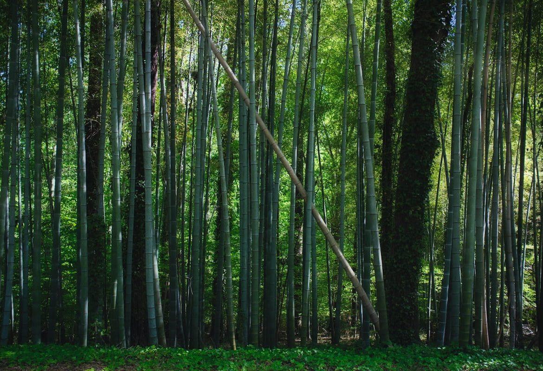 bamboo fiber material